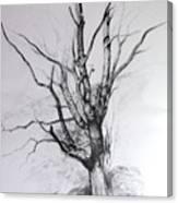 Study Of A Tree Canvas Print