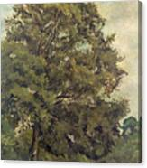 Study Of An Ash Tree Canvas Print