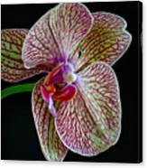 Study Of An Orchid 2 Canvas Print