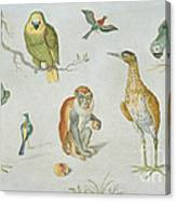 Study Of Birds And Monkeys Canvas Print