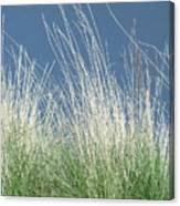 Study Of Grass Canvas Print