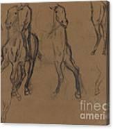 Study Of Horses Canvas Print