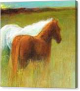 Study Of Two Ponies Canvas Print