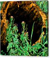 Stump Transformed Canvas Print
