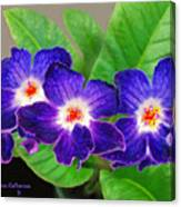 Stunning Blue Flowers Canvas Print