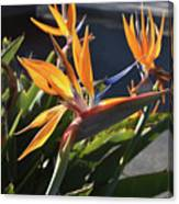 Stunning Bunch Of Flowers With Bright Orange Petals  Canvas Print