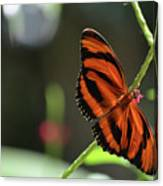 Stunning Orange And Black Oak Tiger Butterfly In Nature Canvas Print