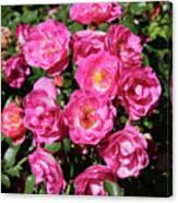 Stunning Pink Roses Canvas Print