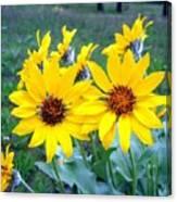 Stunning Wild Sunflowers Canvas Print
