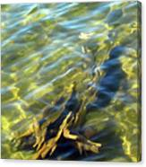 Submerged Tree Abstract Canvas Print