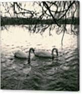 Subtle Swans  Canvas Print