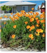 Suburban House On Orchard Avenue With Poppies Hayward California 3 Canvas Print