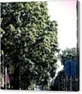 Suburban Tree Canvas Print