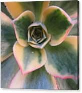 Succulent 2 Canvas Print