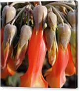 Succulent Bells Canvas Print
