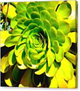 Succulent Close Up Canvas Print