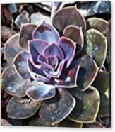 Succulent Plant Poetry Canvas Print