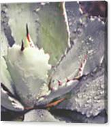 Succulent Raindrops Canvas Print