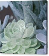 Succulents 2 Canvas Print