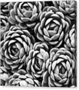 Succulents In Black And White Canvas Print