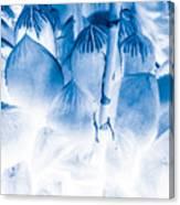 Succulents In Bleu Canvas Print