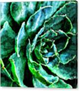 succulents Rutgers University Gardens Canvas Print
