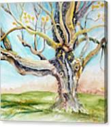 Sugar Maple On Mutton Lane Canvas Print