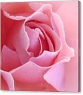 Sugar Of Rose Canvas Print
