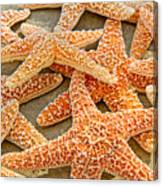 Sugar Starfish Canvas Print