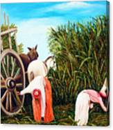 Sugarcane Worker 1 Canvas Print