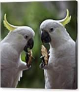 Sulphur Crested Cockatoo Pair Canvas Print