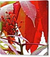 Sumac Closeup On White Pine Trail In Kent County, Michigan Canvas Print