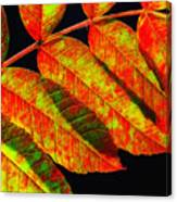 Sumac Leaves Canvas Print