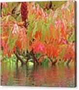 Sumac Tree Autumn Reflections Canvas Print