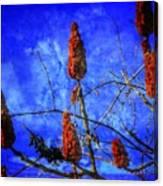 Sumac Tree Canvas Print