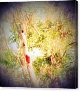 Sumac Tree In The Sunlight Canvas Print