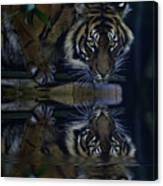 Sumatran Tiger Reflection Canvas Print