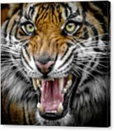 Sumatran Tiger Snarl Canvas Print