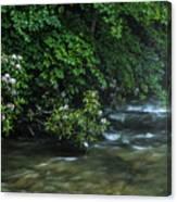 Summer Along Birch River Canvas Print
