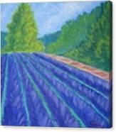 Summer At The Lavender Farm Canvas Print