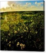 Summer Beach Daisy Canvas Print
