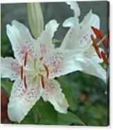 White Tiger Lilies  Canvas Print