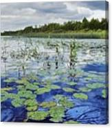 Summer Blue  Lake Under Clody Grey Sky With Forest On Coast Canvas Print