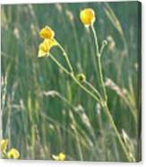 Summer Buttercups Canvas Print