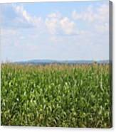 Summer Corn And Blue Skies In Maine  Canvas Print