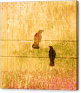 Summer Crows Canvas Print
