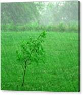 Summer Downpour Canvas Print