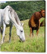 Summer Evening For Horses Canvas Print