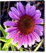 Summer Flower In Fading Light Canvas Print