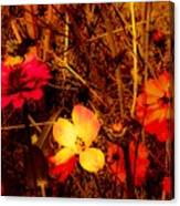 Summer Glow On Flowers Canvas Print